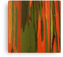 Hawaiian Eucalyptus Canvas Print