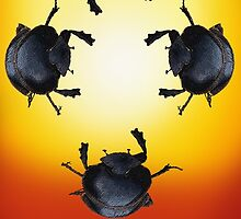 Celebrate - Dung Beetles by eleventimes