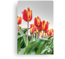 Dutch Tulips part 2 Canvas Print