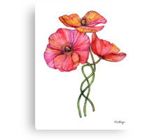 Peach & Pink Poppy Tangle Canvas Print