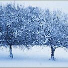 Blue Glass Winter Apples by Wayne King