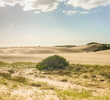Dunes of Cariló Beach in Argentina by DFLCreative