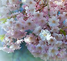 Blossoming Tree - Early Spring  by Miriam Danar