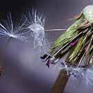 Seeding Taraxacum by Mark Smith