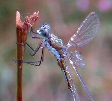Damselfly and Morningdew by ienemien