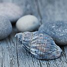 Sea shell by artsandsoul