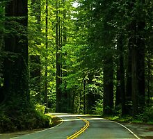Avenue of the Giants by Barbara  Brown