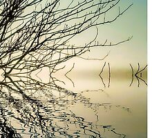 Reflections on the water by Tony Swinton