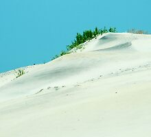 Dune by Mary Ann Reilly