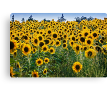 Pick me! Pick me! – Prints, Cards and iPhone Canvas Print