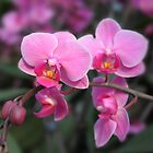 Beautiful pink orchid flowers. Floral photo art. by naturematters