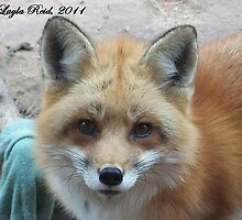 Angelic Red Fox by veggiefox