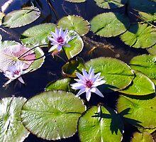 Stonebridge Garden Lily Pads by SuSparrow