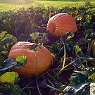 what did one pumpkin say to the other pumpkin? by evon ski