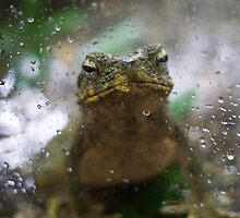 A Frog Day by Diego  Re