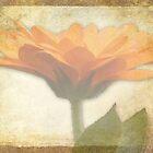 Marigold by Lynn Bolt