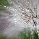 After rain by Jeannine St-Amour