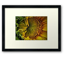 Close Contact Framed Print