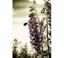 British Summertime Photographic Print