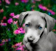 Puppy in the pink by missmoneypenny