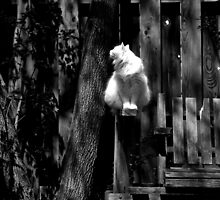 White Cat On Bench Black & White by BonnieToll