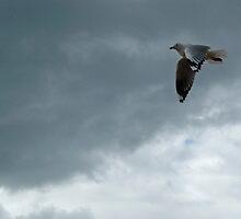 Grey: Phillip Island, Australia by Sally Kate Yeoman