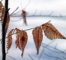 Winter Leaves by BonnieToll