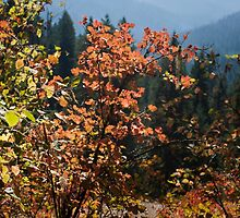 Photo of Scenic View Through Fall Leaves by griffingphoto