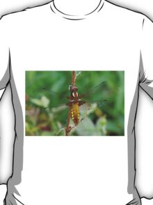 Female Broad-bodied Chaser T-Shirt