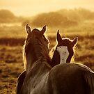 16.9.2014: Horses by Petri Volanen