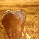 15.9.2014: Horse and Midges by Petri Volanen