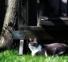 Cat In Grass by BonnieToll