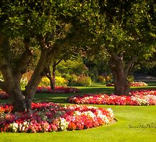 Three Trees - Butchart Gardens by Yannik Hay