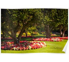 Three Trees - Butchart Gardens Poster