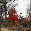 Cleveland Metroparks Zoo  by BarbBarcikKeith