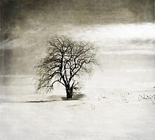 Black and White Winter Tree by BrookeRyanPhoto