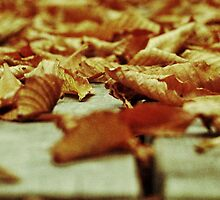 Leaves by Triggle