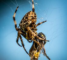 Caught in the Web by James Bovington
