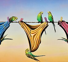 Budgie Smugglers by John  Murray