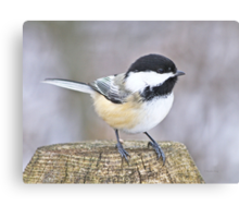 Chickadee on a used to be tree Canvas Print