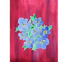 Forget-Me-Nots Photographic Print