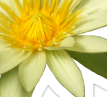 Photo of a single white water lily Sticker