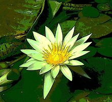 Green and White Water Lily Flower by LastLittleBird