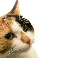 Whatcha Doing Calico Lil by Ladymoose