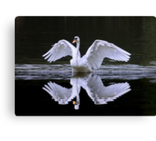 Swan and Reflection ... Two for One Canvas Print