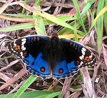 Butterfly by Hermien Pellissier