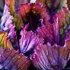 Ornamental Cabbage Rainbow by Gilda Axelrod