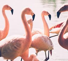 Pink Flamingo Flock by PatiDesigns