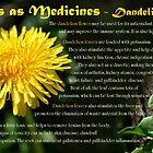Herbs as Medicines: Dandelion by cdwork