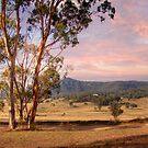 Wineries in Denman - Near Muswellbrook, NSW by Mark Richards